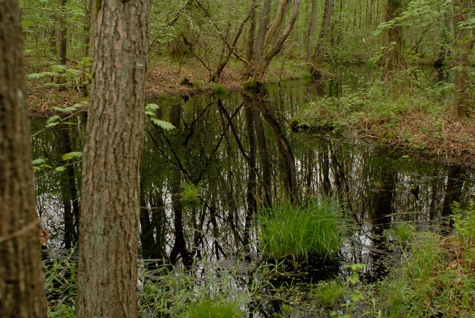 Ticheldobben in de Leemdobben (foto E. Houting).