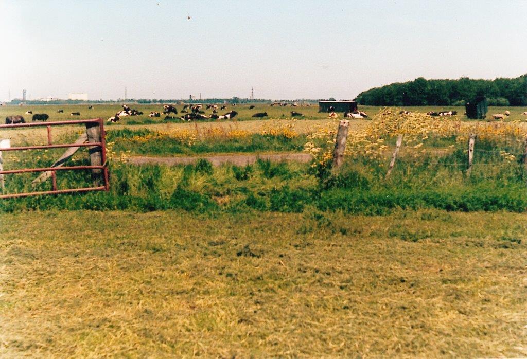 Aan de overkant van de Onlandse dijk ligt de Tip, een klein perceel waar nu de parkeerplaats bij het Oerbosmonument ligt.